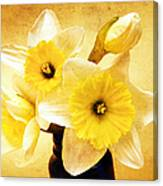 Just Plain Daffy 1 - Flora - Spring - Daffodil - Narcissus - Jonquil Canvas Print