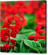 Just Red Canvas Print