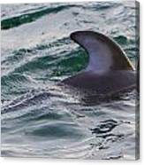 Just The Dorsal Canvas Print