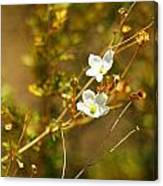 Just Two Little White Flowers Canvas Print