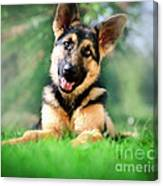 K9 Cute Canvas Print