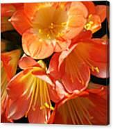 Kaffir Lily Canvas Print