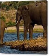 Kalahari Elephants Preparing To Cross Chobe River Canvas Print