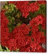 Kalanchoe Flowers Canvas Print