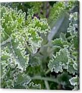 Kale Interior Canvas Print