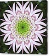 Kaleidoscope Pink Daisy Canvas Print