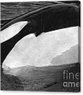 Kandu Orca Seattle Aquarium 1969 Pat Hathaway Photo Killer Whale Seattle Canvas Print