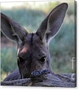Kangaroo-4 Canvas Print