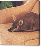 Kangaroo Buddy Sculpture Canvas Print