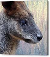 Kangaroo Potrait Canvas Print