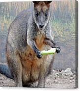kangaroo Snack Canvas Print