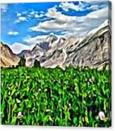 Kashmir Field Canvas Print