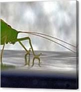 Katydid Reflection Canvas Print