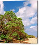 Kauai Beach Canvas Print