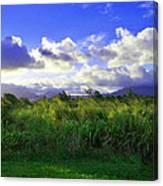 Kauai Grass Canvas Print