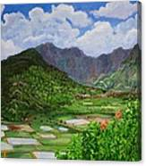 Kauai Taro Fields Canvas Print