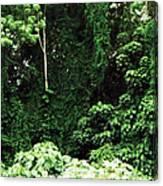 Kauai Trees Canvas Print