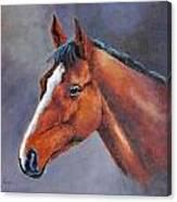 Kauto Star Canvas Print
