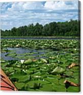 Kayaking Among The Waterlillies Canvas Print
