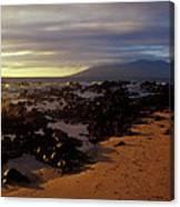 Keawakupu Beach Lava Evening Light Maui Hawaii Canvas Print