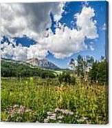 Kebler Pass Meadow Canvas Print
