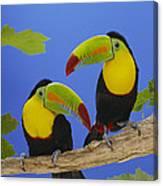 Keel-billed Toucan Pair Canvas Print