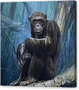 Keeper Of The Congo Canvas Print