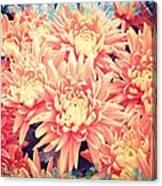 Keepsake Chrysanthemum  Canvas Print