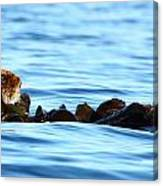 Kelp Bed Rondezvous Canvas Print