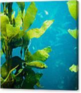 Kelp One Canvas Print