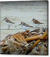 Kelp Standing Visitors Canvas Print