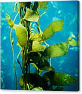 Kelp Two Canvas Print