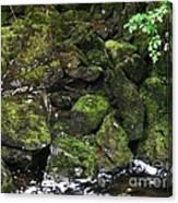 Ketchikan Riverbank Canvas Print