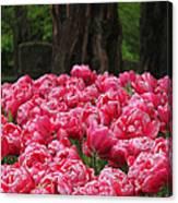 Keukenhof Gardens 16 Canvas Print