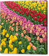 Keukenhof Gardens 74 Canvas Print