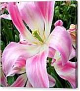 Keukenhof Pink Lily Canvas Print