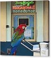 Key West - Parrot Taking A Break At Margaritaville Canvas Print