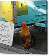 Key West - Rooster Making A Living Canvas Print