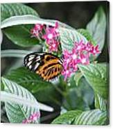 Key West Butterfly Conservatory - Monarch Danaus Plexippus 2 Canvas Print