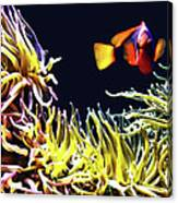 Key West Fish Canvas Print