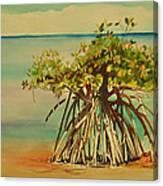 Keys Mangrove Canvas Print