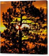 Keystone Pine Canvas Print