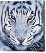 Khan The White Bengal Tiger Canvas Print