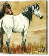 Kiger Mares Canvas Print
