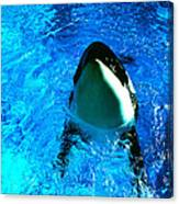 Killer Whale Greeting Canvas Print