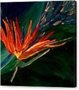 Kims Paradise Canvas Print