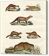 Kinds Of Otters And Marten Canvas Print