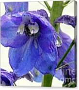 King Delphinum  Canvas Print