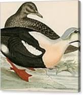 King Duck Canvas Print