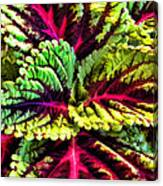 King Kong Coleus Canvas Print